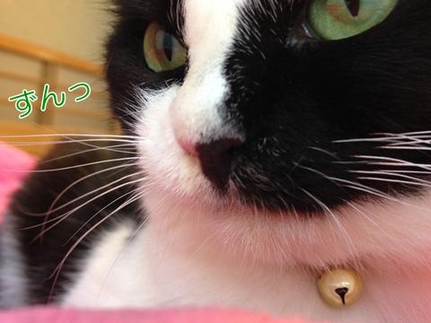 猫鼻ドアップ