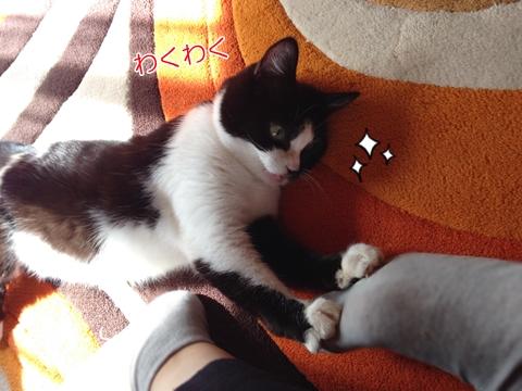 猫遊びに誘う2