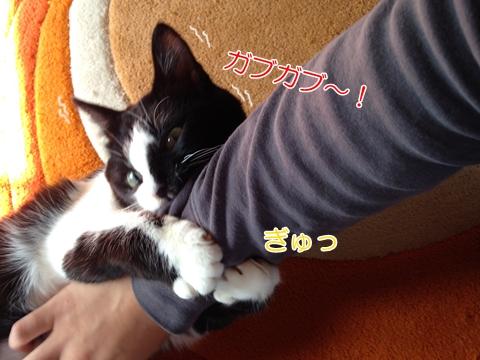 猫遊びに誘う3