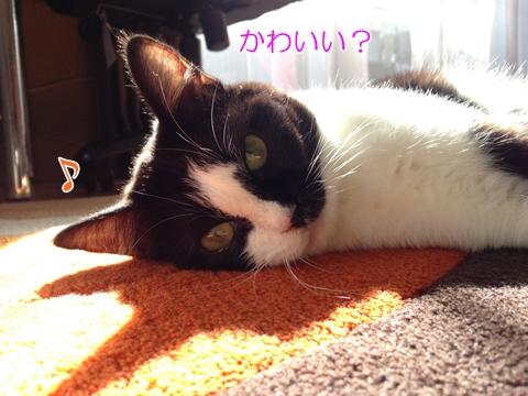猫影かわいい