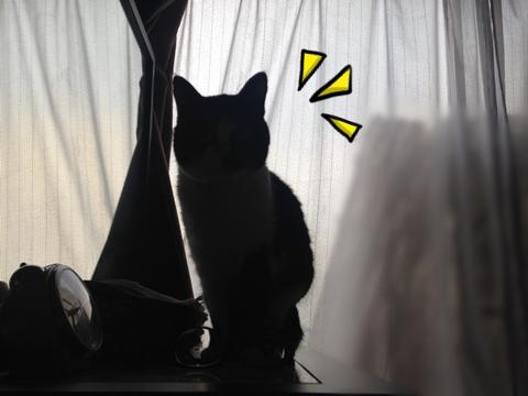 猫の影が小トトロ
