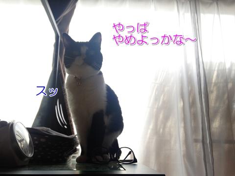 猫メガネを落とす2