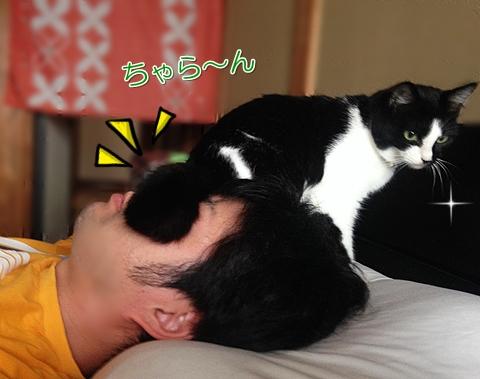 猫頭にお尻を乗せる
