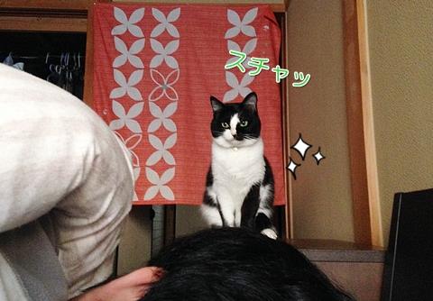 猫朝起こす