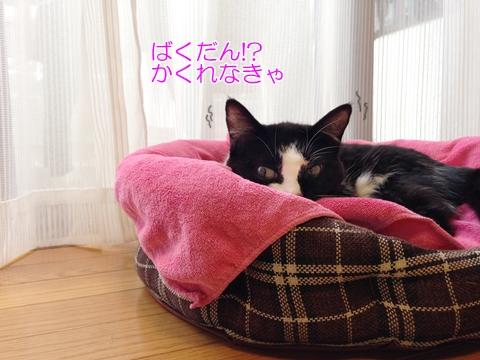猫隠れるベッド