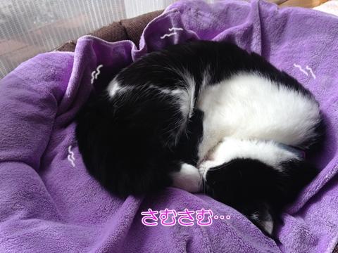 猫寒いベッドで丸くなる