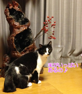 猫とローズヒップと古木