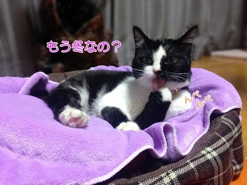 猫湯たんぽが好き3
