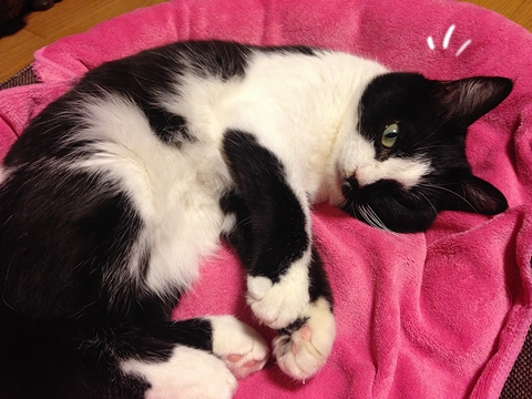 猫腹モフ大好き