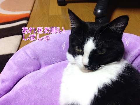 猫寒いの苦手2