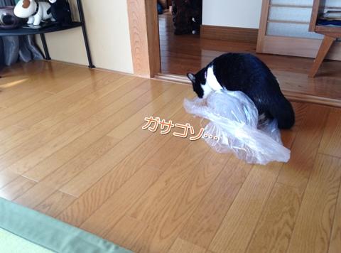 猫はビニール袋が好き