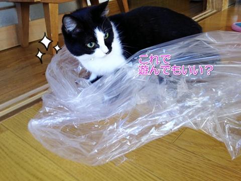 猫はビニール袋が好き2