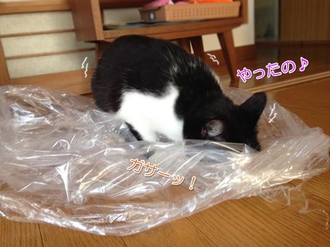猫はビニール袋が好き3