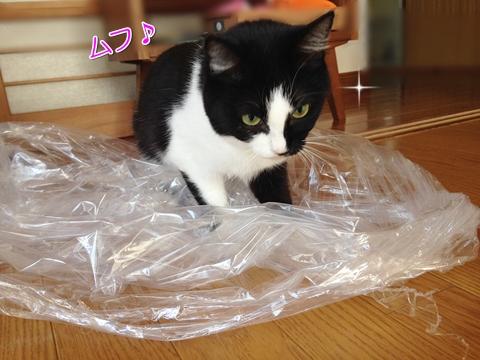 猫はビニール袋が好き4