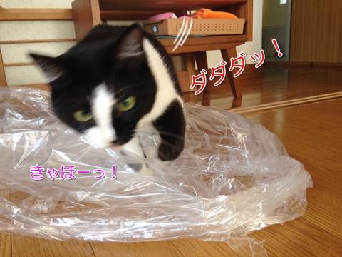 猫はビニール袋が好き5
