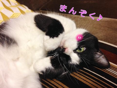 猫の満足顔