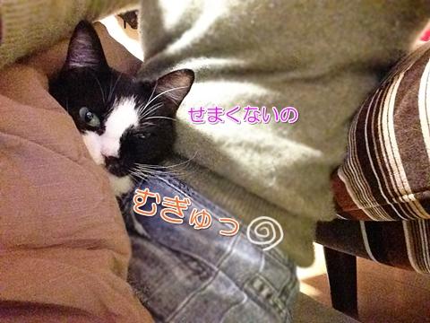 猫こたつで膝の上2