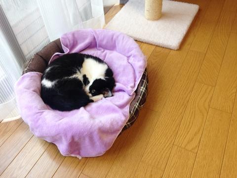 猫寝ながら盗み見る