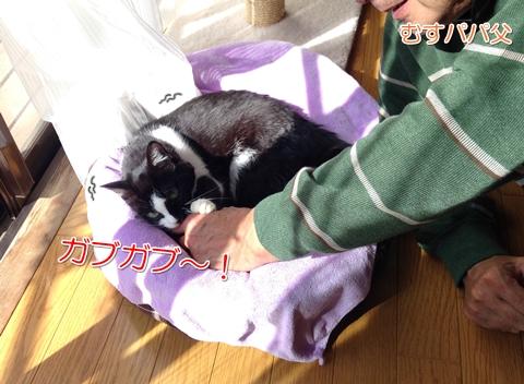 猫おもてなしガブガブ