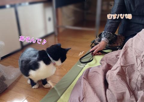 猫来客をおもてなし