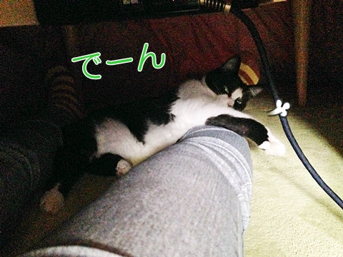 猫こたつの中で足に乗る2