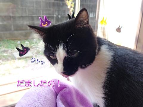 猫のハロウィン衣装6