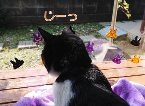 猫のハロウィン衣装