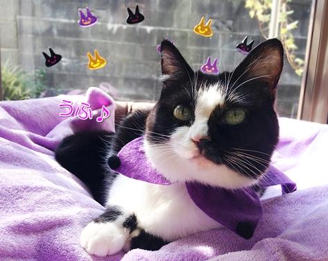 猫ハロウィン首輪100均2
