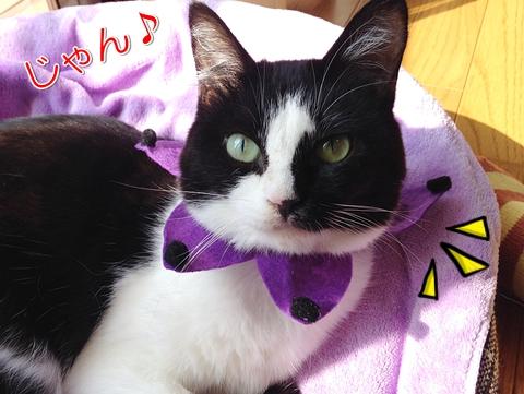猫ハロウィン首輪100均