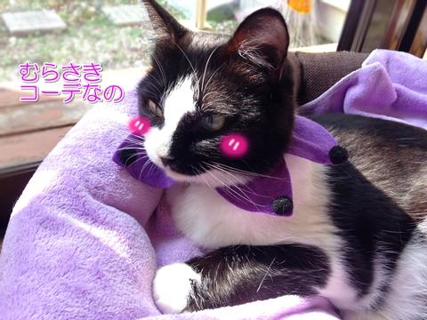 猫ハロウィン首輪100均3