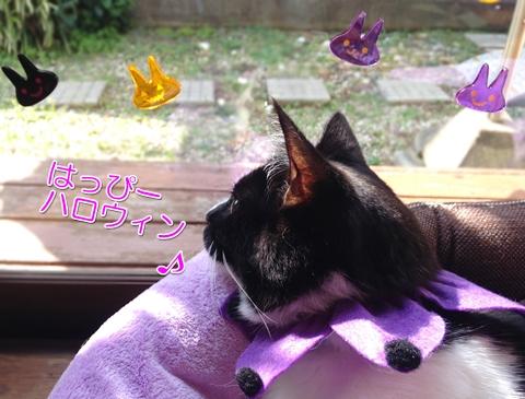 猫ハロウィン首輪100均4