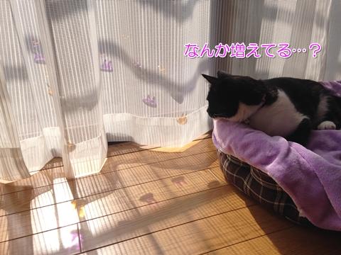 猫ジェリーシール100均