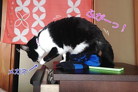 猫の悪知恵