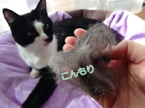 猫のブラッシング抜け毛の量