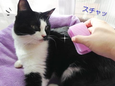 猫のブラッシング頻度は毎日?