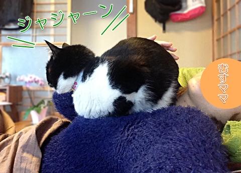 猫ヒトの上に乗っかる