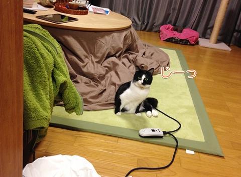 猫変な座り方横座り