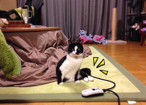 猫変な座り方横座り2