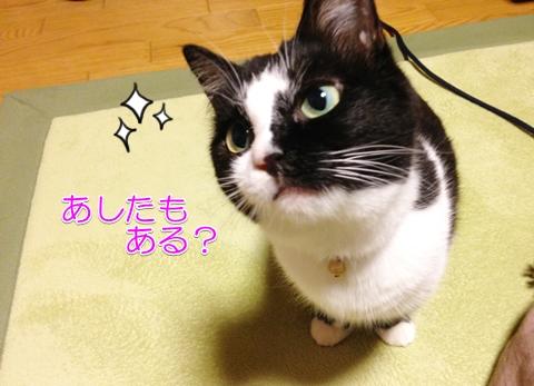 猫スペシャルおやつ