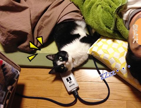 猫 添い寝 こたつ