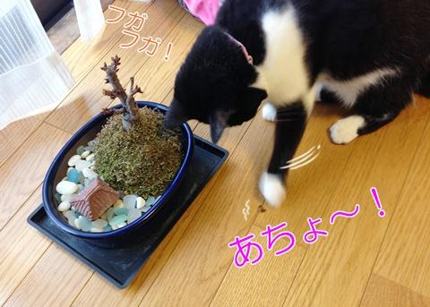 猫 桜の木 いたずら