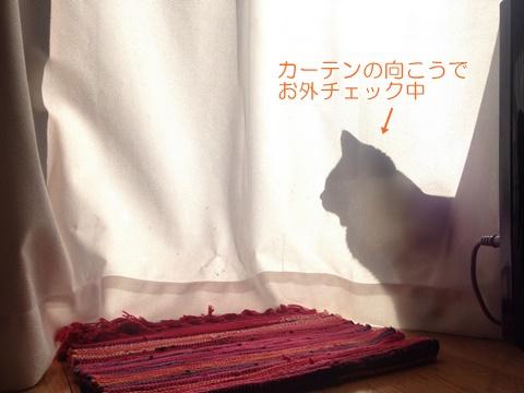 猫のマンション暮らし、窓の外の景色はベランダでも満足?