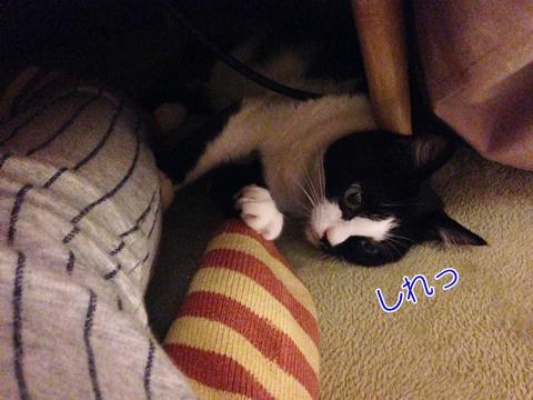 猫は静電気を感じない?