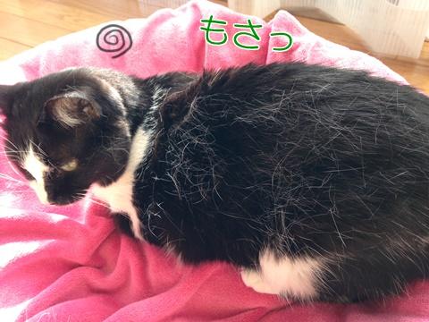 猫の静電気対策の良い方法は?