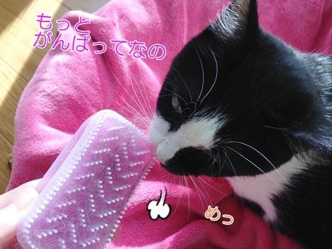 猫の静電気とブラッシング