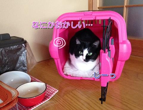 猫の引っ越しストレスと慣れ