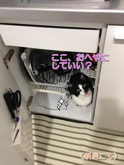猫可物件への引っ越し体験談