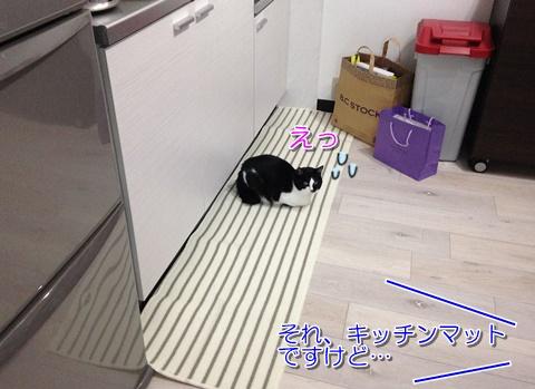 猫キッチンマットお気に入り