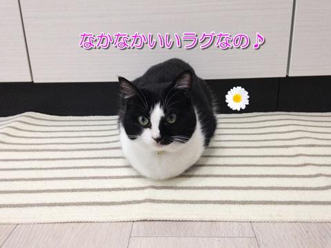 猫とキッチンマット