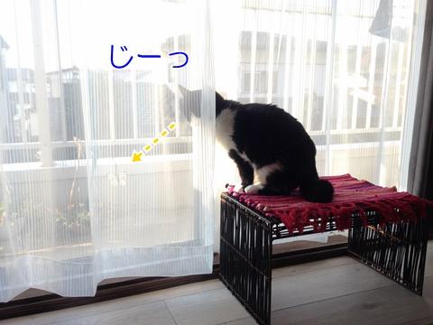 猫ちょうちょが好き
